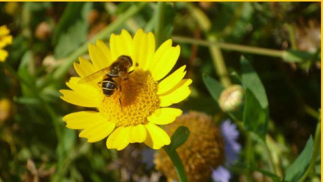 Comment planter malin ? Comment planter mellifère ?