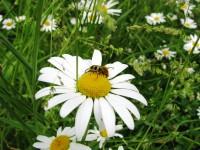 Que faire avec les plantes dites « indésirables » dans votre jardin ? Alternatives aux pesticides.